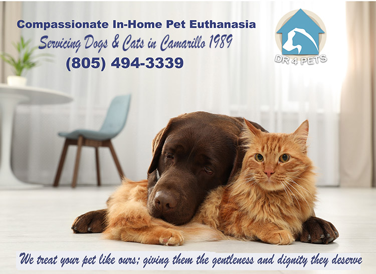 Camarillo-at home cat euthanasia